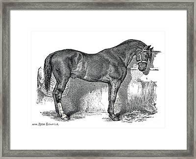 Antique Horse Drawing Framed Print