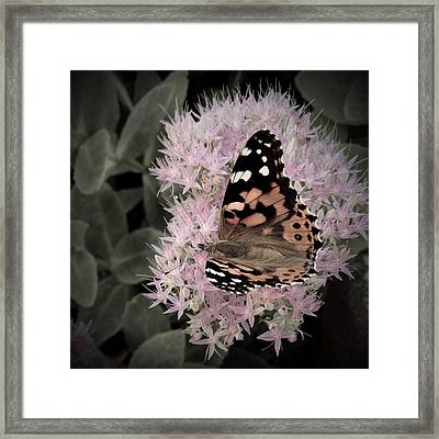 Framed Print featuring the photograph Antique Monarch by Photographic Arts And Design Studio