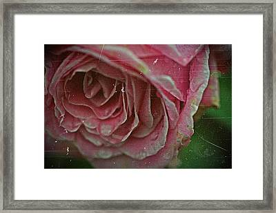Antique Rose In Fog Framed Print
