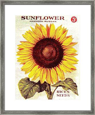 Antique Sunflower Seeds Pack Framed Print