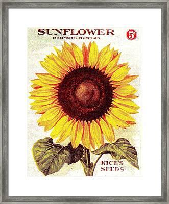 Antique Sunflower Seeds Pack Framed Print by Peter Gumaer Ogden