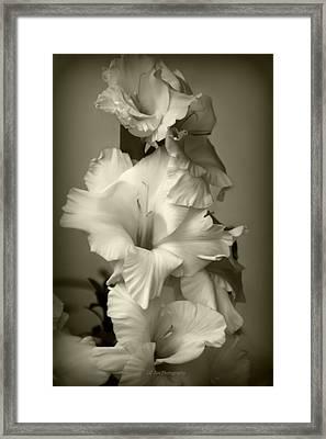 Antiqued Gladiolus Framed Print