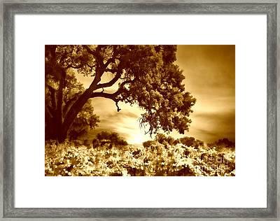 Antiqued Vineyard Framed Print