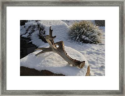 Antler Framed Print by Heather L Wright
