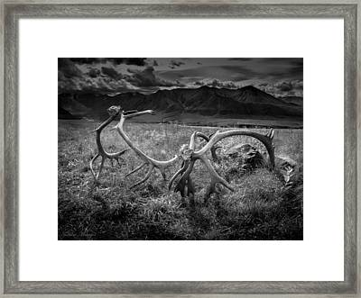 Antlers In Black And White Framed Print