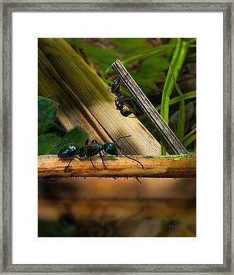 Ants Adventure 2 Framed Print by Bob Orsillo
