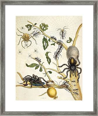 Ants And Spiders Of Surinam, 18th Century Framed Print by British Library