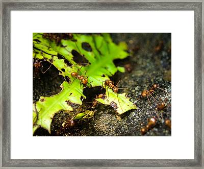 Ants At Work Framed Print