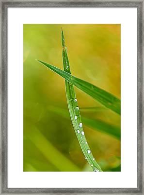 Ants Eye View Framed Print