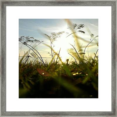 Framed Print featuring the photograph Ant's Eye View by Thomasina Durkay