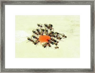 Ants Feeding Framed Print by Heiti Paves