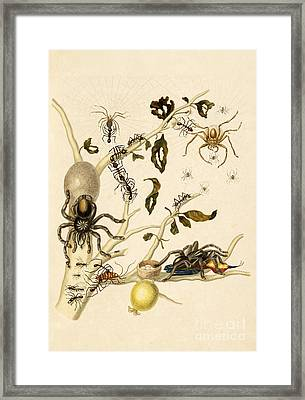 Ants Spiders Tarantula And Hummingbird Framed Print
