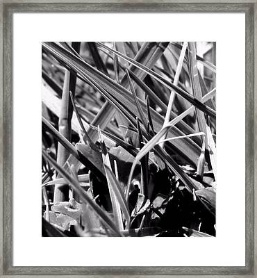 Ant's View Of The World Framed Print