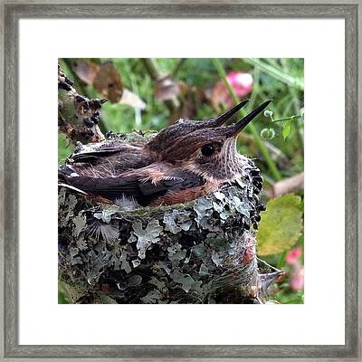 Any Day Now I Expect To Check The Nest Framed Print