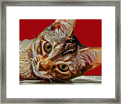 Anya Cat 3 Framed Print by David G Paul