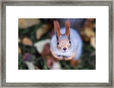 Anyting To Bite - Featured 3 Framed Print by Alexander Senin