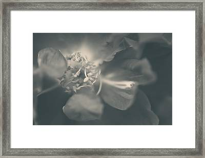 Anywhere I Would've Followed You Framed Print
