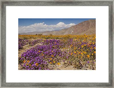 Anza-borrego Wildflowers 25 Framed Print