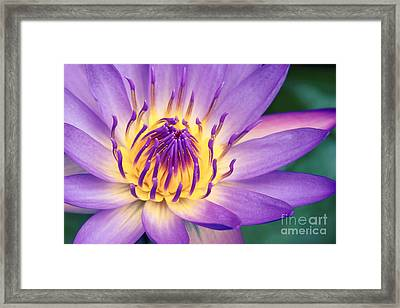 Ao Lani Heavenly Light Framed Print