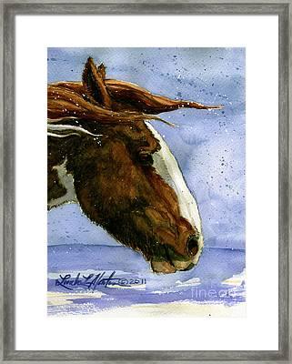 Apache Bachelor Stallion Of Sand Wash Basin Framed Print