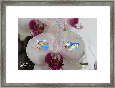 Aphrodites Birth Place In A Flower Framed Print