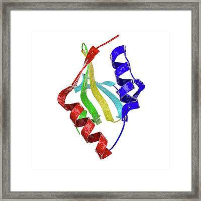 Apo Toxin Of Helicobacter Framed Print by Kateryna Kon