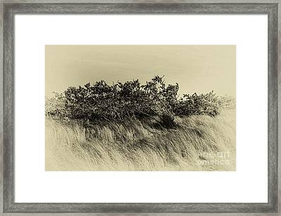 Apollo Beach Grass Framed Print by Marvin Spates