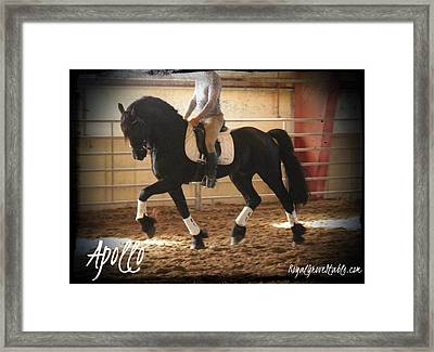 Apollo Friesian Stallion Framed Print