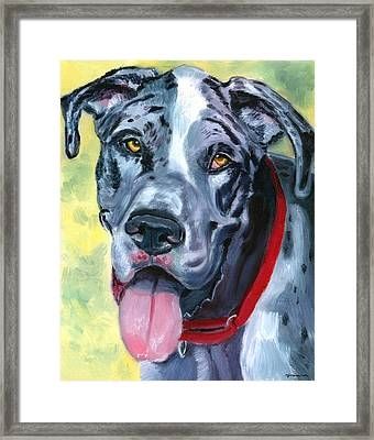 Apollo Of Dogs - Great Dane Framed Print by Lyn Cook