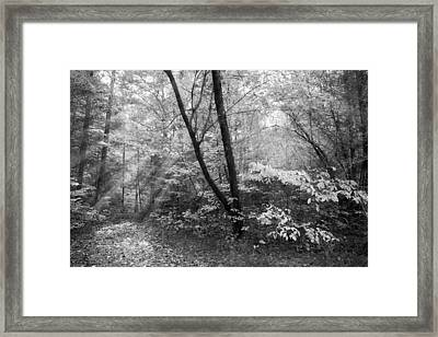 Appalachian Mountain Trail In Black And White Framed Print