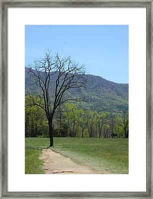 Appalachian Pathway Framed Print