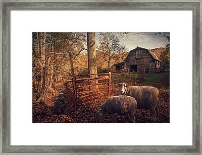 Appalachian Sheep Framed Print by William Schmid