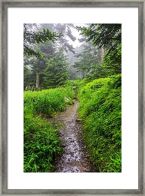 Appalachian Trail At Clingmans Dome Framed Print