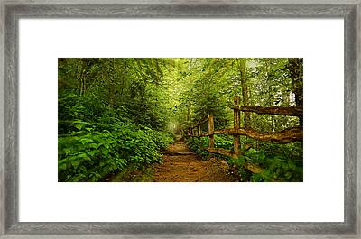 Appalachian Trail At Newfound Gap Framed Print by Stephen Stookey