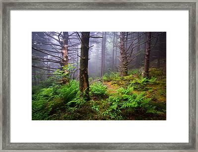 Appalachian Trail Blue Ridge Mountains Nc Forest Framed Print by Dave Allen