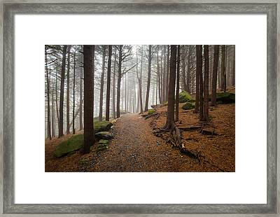 Appalachian Trail Landscape Photography In Western North Carolina Framed Print by Dave Allen