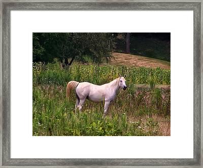 Appaloosa Horse Framed Print by Chris Flees