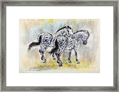 Appaloosa Horses Framed Print by Kurt Tessmann