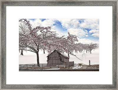 Apparition Framed Print by Liane Wright