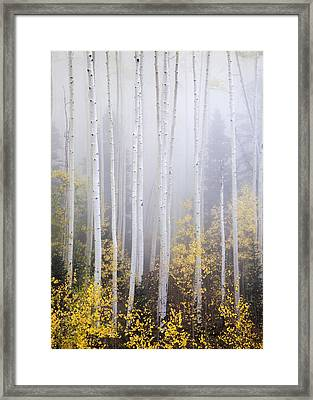 Apparitions I Framed Print