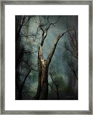 Appeal To The Sky Framed Print by Cynthia Lassiter