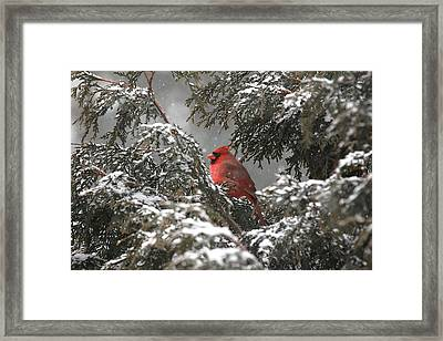 Appearence 1 Framed Print by Frederic Vigne