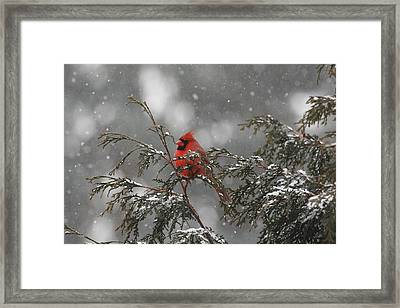 Appearence 2 Framed Print by Frederic Vigne