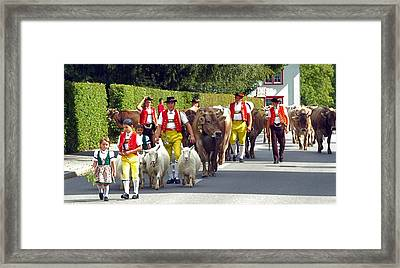Appenzell Parade Of Cows Framed Print