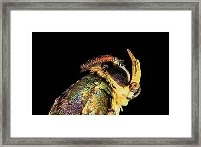 Apple Bark Borer Moth Framed Print