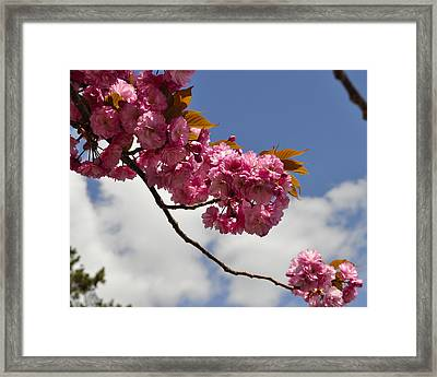 Apple Beauty Framed Print