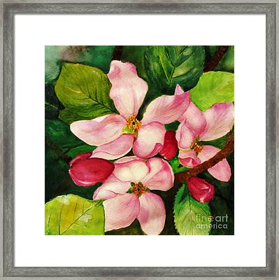 Apple Blossom Framed Print by Anjali Vaidya