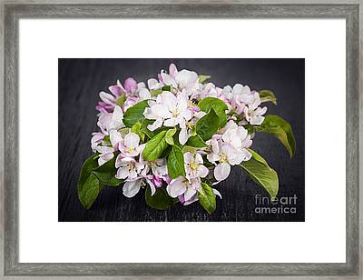 Apple Blossom Bouquet Framed Print by Elena Elisseeva