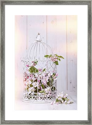 Apple Blossom Framed Print by Amanda Elwell