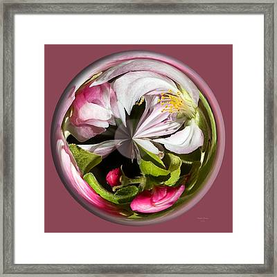 Apple Blossom Globe Framed Print